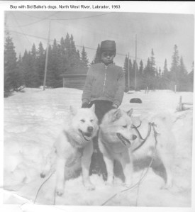 Boy with Sid Blale's Dogs, North West River, 1963